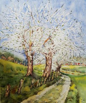 Cerisiers1